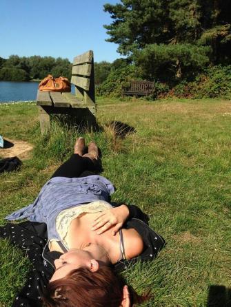 English rose bathing in the sun.